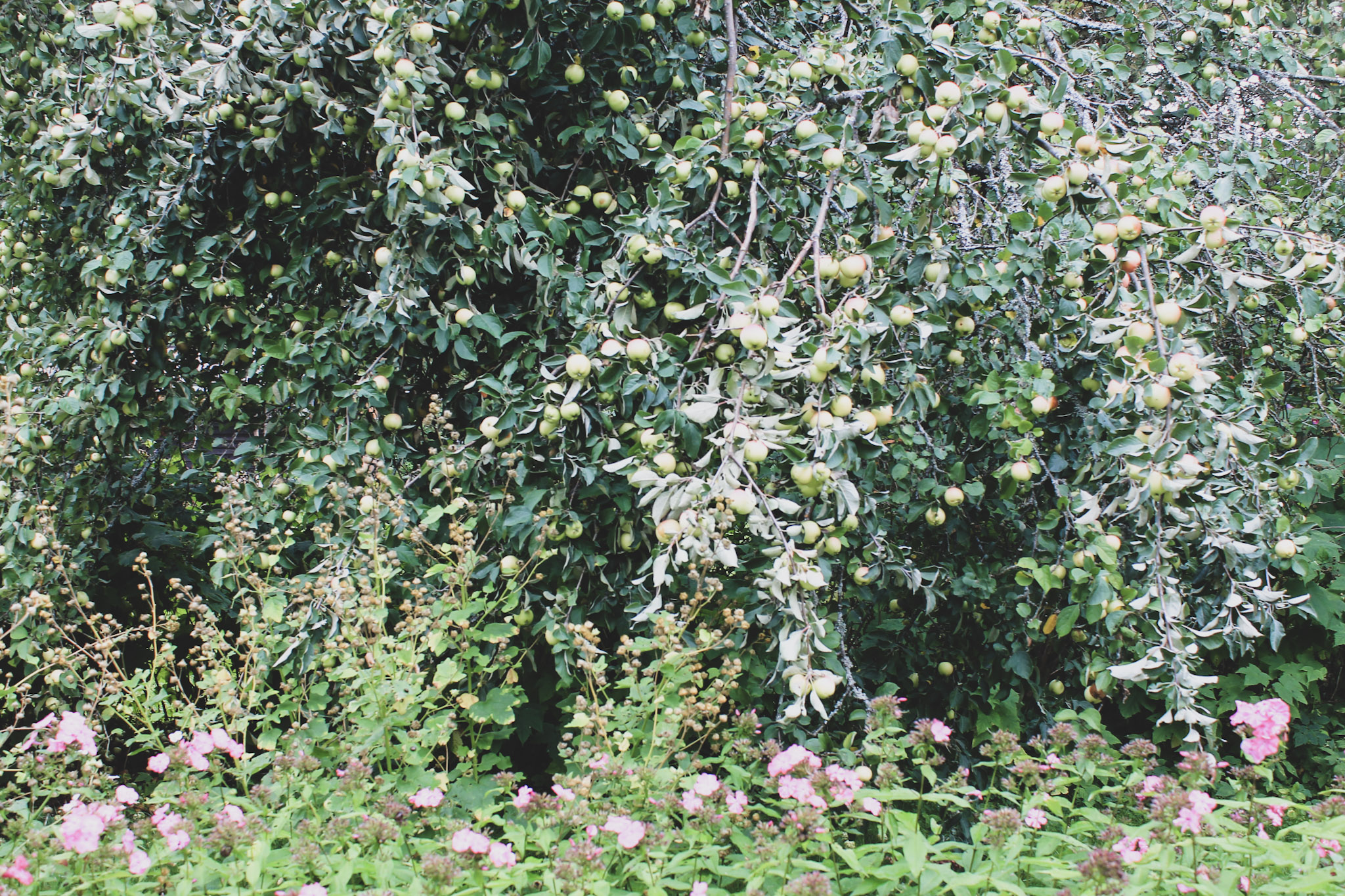 omenoitaomamaa.jpeg